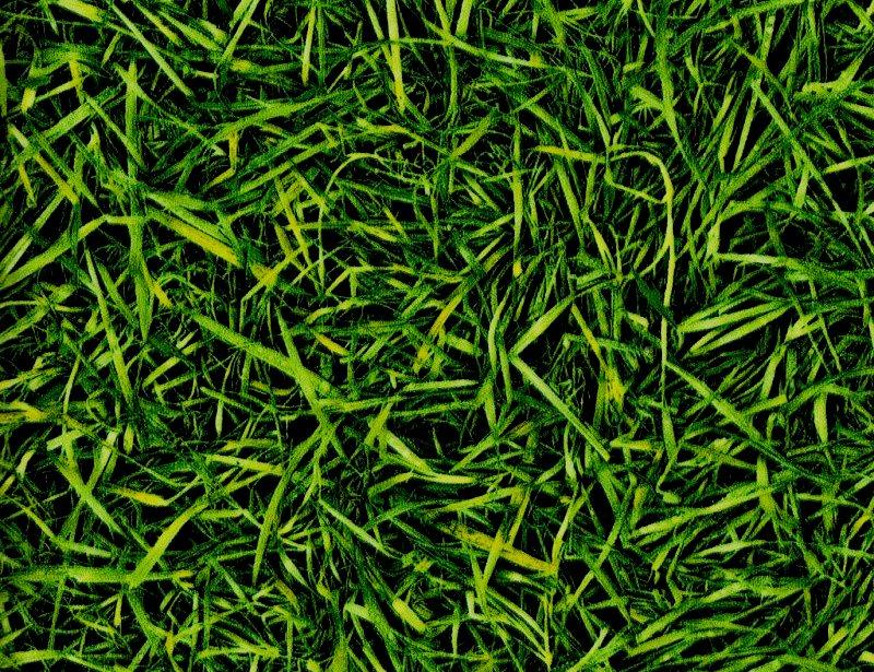 IVC, Bingo Grass